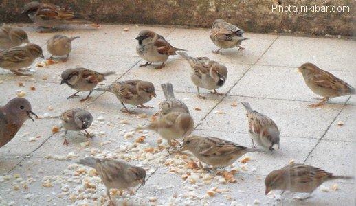Ah ces oiseaux !